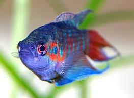 Рыбы Википедия