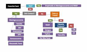 Petechiae Flow Chart Flow Chart For Petechial Rash Hd Png