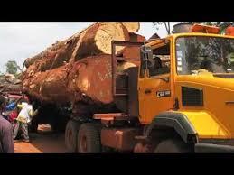 visual essay deforestation