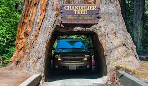 what and where is the chandelier tree