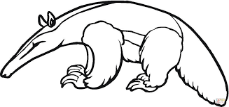 Small Picture Anteater 4 coloring page Free Printable Coloring Pages