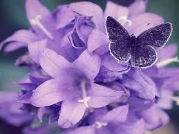 Purple Flowers Backgrounds 62 Purple Flowers Background On Wallpapersafari