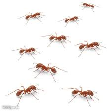 Small Red Ants In Kitchen How To Get Rid Of Ants The Family Handyman