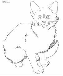Small Picture Beautiful Cat And Kitten Coloring Pages Ideas Coloring Page