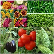 Kitchen Garden Seeds Perfect Summer Kitchen Garden 10 Packets Biocarve Seeds