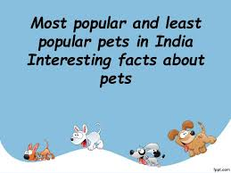 Most Popular Pets Most Popular And Least Popular Pets In India