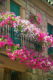 balcony gardens. Spectacular-Balcony-Garden-Woohome-1 Balcony Gardens