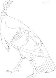 wild turkey coloring pages. Wonderful Pages American Wild Turkey Line Art Click Here For The Free Printable Coloring  Page 85 By 11 Inch Paper  Then Click  To Coloring Pages