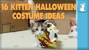cute kittens in halloween costumes. Modren Halloween Throughout Cute Kittens In Halloween Costumes C