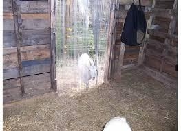pet door flaps and strip door