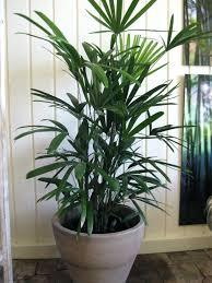 Indoor Planters Pots Office Pot Plants Cute Interior And Magnificent Indoor  Plants Architectures B Q Indoor Plant