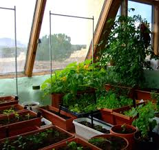indoor kitchen garden. Cozy Apartment Indoor Kitchen Gardening At The Plastic Pots Under Sloping Glass Windows Ceiling Garden