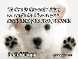 Pet Quotes Fascinating Pet Quotes Collection At Quotesduck