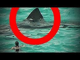 real megalodon shark sightings pictures. Modren Sightings Real MEGALODON Shark Sightings CAUGHT On Camera BIGGEST SHARKS In The  WORLD Ever FOUND In Megalodon Shark Sightings Pictures YouTube