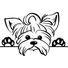 More than 5.000 printable coloring sheets. Yorkie Coloring Pages Best Coloring Pages For Kids