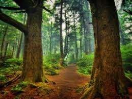 hd wallpapers nature forest. Wonderful Nature La Push Forest Wallpaper Landscape Nature And Hd Wallpapers Forest 1