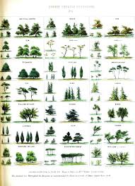 House Plant Identification By Leaf Shape Homecoinonline Info