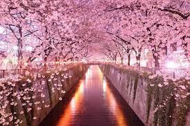 Japan Sakura Background Wallpapers HD ...
