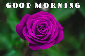 good morning flowers wallpaper pictures images free hd