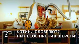 Тест <b>Thomas DryBOX</b>+<b>AquaBOX Cat & Dog</b> | Для владельцев ...