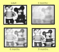 Baby Vision Chart Vision Development