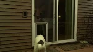 Security Screen Doors with Dog Door Image Collections Doors Design ...