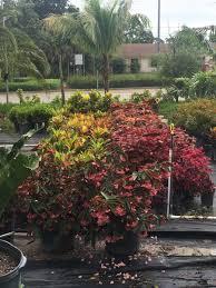 best palm tree nursery whole and