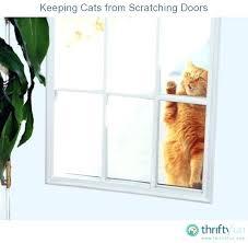 prevent dog from scratching door stop dog scratching door at night keeping cats from stop dog