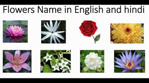 Indian Flowers Name In Hindi And English With Pictures Learning For Kids