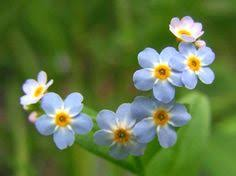 my next tattoo a few blue forget me nots with the words i remember you for my grandma i think of you every day and love you so deeply