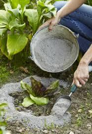 """Résultat de recherche d'images pour """"cendre autour des plantes"""""""