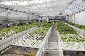 Hispanic In Grow Farm Low-income The Colorado Growhaus Indoor Aquaponic An Elyria-swansea Fotostock At Plants Age Mostly Denver Mediabakery Neighborhood - By Photo