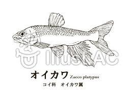 川魚イラスト無料イラストならイラストac