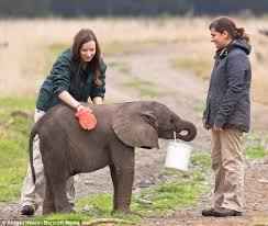 Image result for photos of a child feeding an elephant