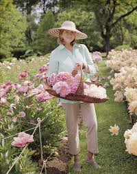 below you will see many photographs of the peony garden in various stages of growth throughout the seasons