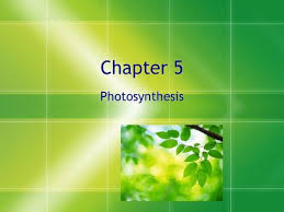best Biology   photosynthesis and respiration images on