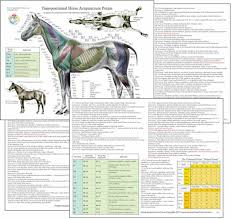 Horse Wormer Chart Horse Equine Acupuncture Meridian Points Chart