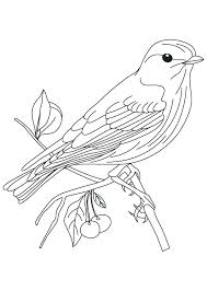 Ideas Adult Bird Coloring Pages And Bird Coloring Pages For Adults