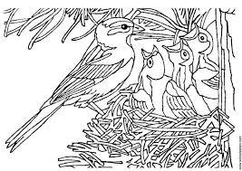 Kleurplaat Vogel Met Nest Afb 3405 Images