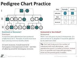 Biology Pedigree Chart Maker Pedigree Charts Worksheet Worksheet Fun And Printable