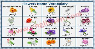flowers name with images in urdu to