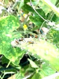 bad garden bugs pictures good garden bugs good garden bugs bugs in garden gardening bugs pests