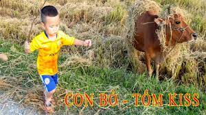 con bò và em bé, em bé đùa nghịch với con bò, đi chăn bò cầm cáy roi thật  to, bài hát con bò, cow - YouTube