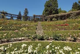 the berkeley rose garden