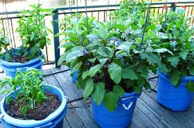 check these terrace vegetable gardens