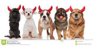 Maltese Dog Devil Photos - Free ...