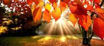 نتیجه تصویری برای انشا درباره پاییز پایه هشتم