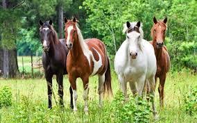 Weide Onderwerp Weiland Verzorging Paard