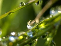 Microphotography of green grass and water dew, green leafed plant. Rain Nature Wallpaper Nature Wallpapers For Free Download About 3 787 Wallpapers