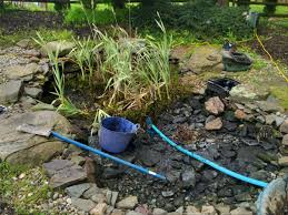 how to clean a koi pond. Perfect Koi How Much Does It Cost To Clean Out A Koi Pond In To A Pond N